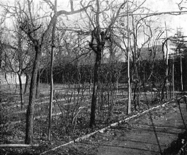 (Luca Beltrami shots of Leonardo Da Vinci's vineyard, taken in 1919